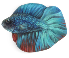 betta-fish-thumbnail