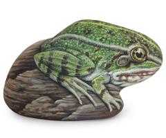 frog-thumbnail