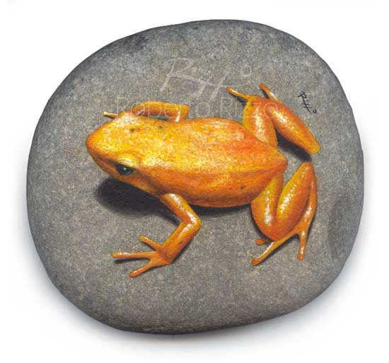 Hand Painted Frog