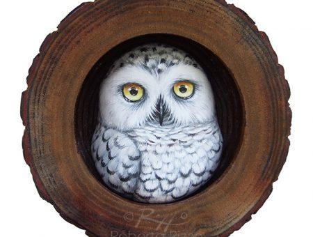 Snowy Owl Nest