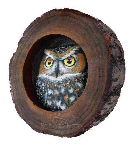 Long Eared Owl Nest 3