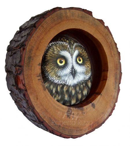 Short Eared Owl Nest 2