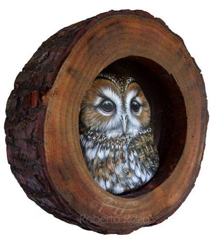 Tawny Owl Nest 3