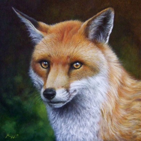 Realistic fox painting wildlife art by Roberto Rizzo