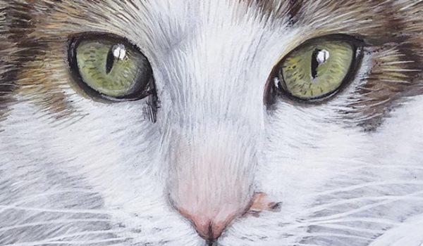 New Rock Cat Portrait On Commission