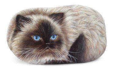 Himalayan Cat  Portrayed On A Rock