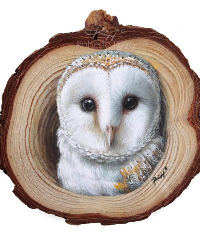 Barn Owl's Lair