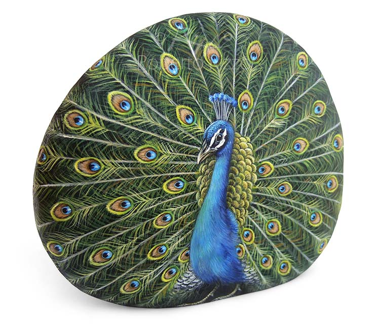 Rock painted peacock in acrylic