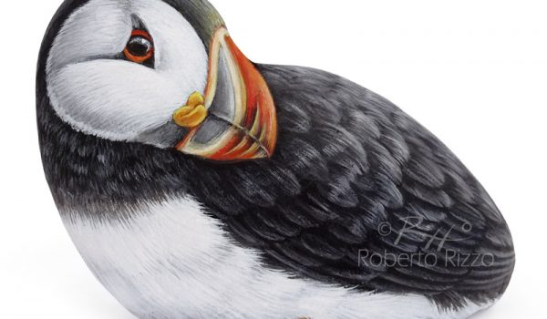 Puffin Painted On A Sea Rock