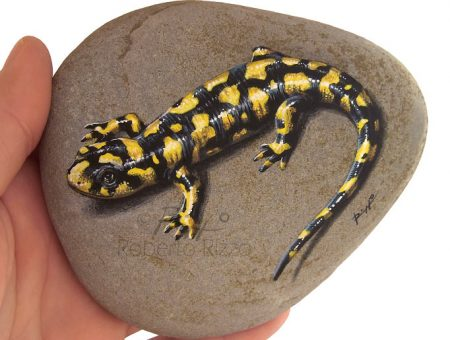 Tiger Salamander Rock Painting