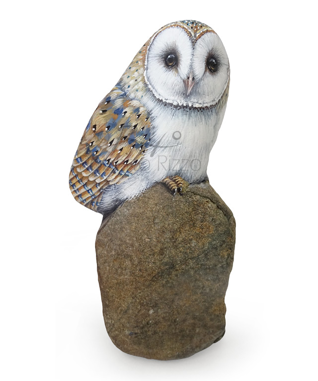 Barn owl painted stone