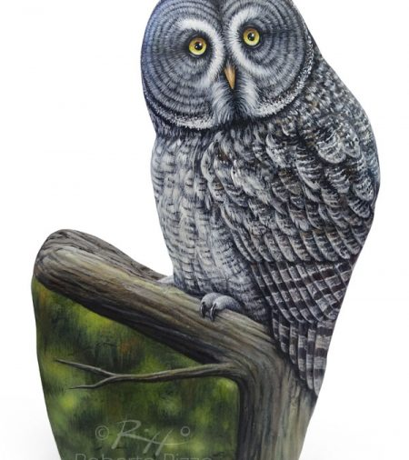 Perched Great Grey Owl